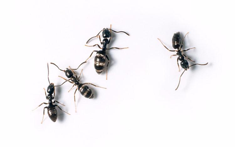 Unit Pest Control