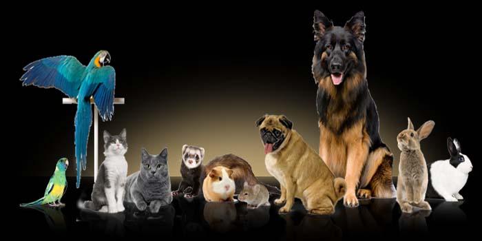 Animal Care Center(Regd.)