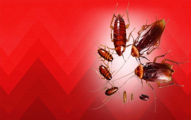 Unique Solution Pest Control