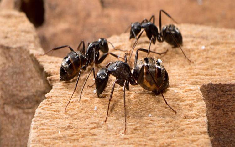 RR Pest Control Service