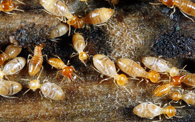 New Pest India